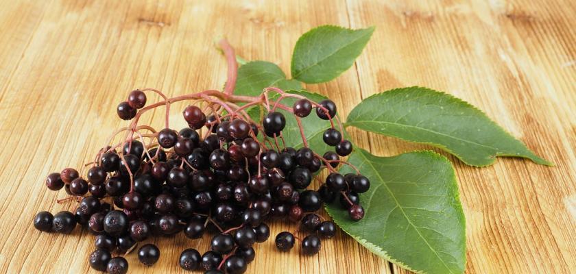plody černého bezu