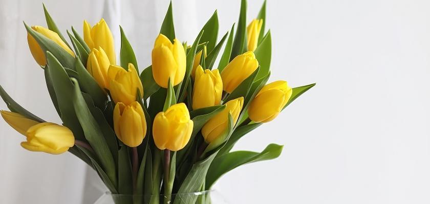 žluté tulipány ve skleněné váze