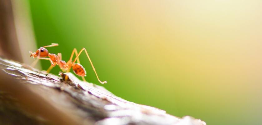 mravenec na zahradě
