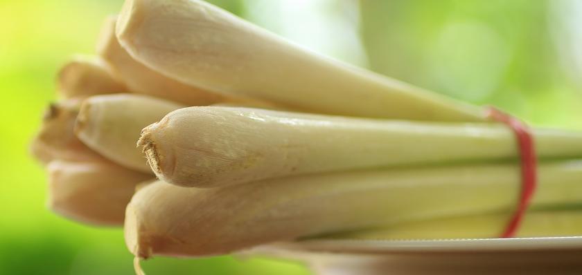 cibulky lemon grass