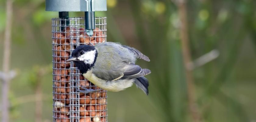 krmítko pro ptáky s oříšky