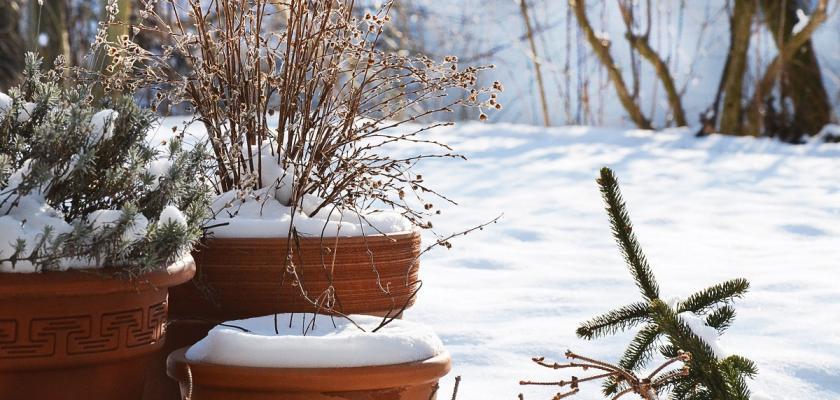 zazimovaná zahrada