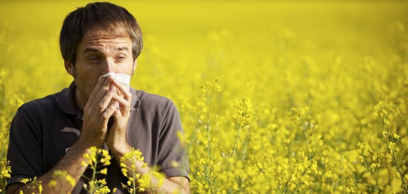 alergik uprostřed pole s řepkou