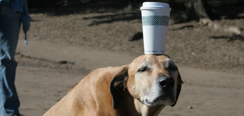 Nemáme rádi zvířata (1.díl): Jak se zbavit psích blech