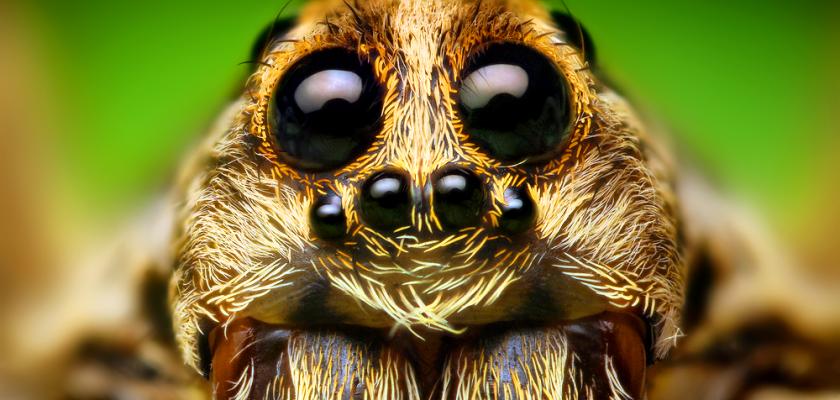 pavouk-detail