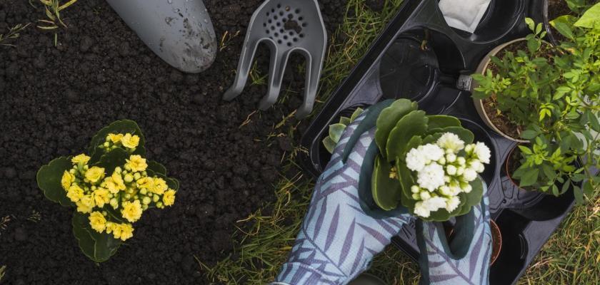 hnojiva a úroda