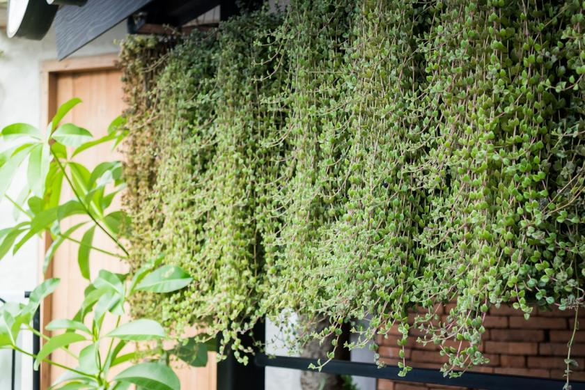 vertikální zelená zahrada