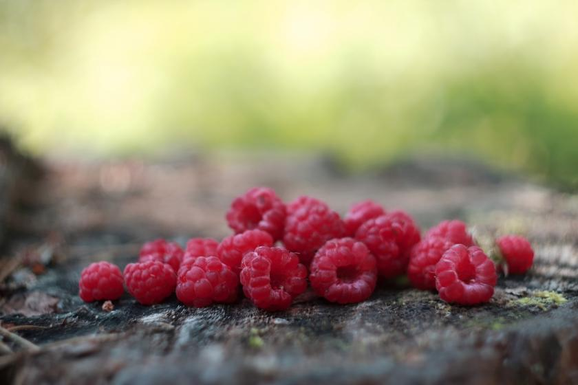 plody malin