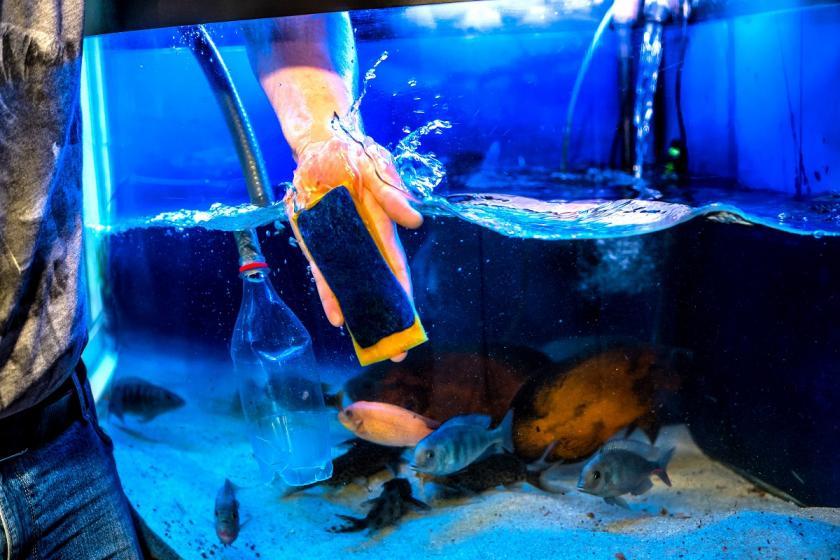 poškrábané sklo akvária