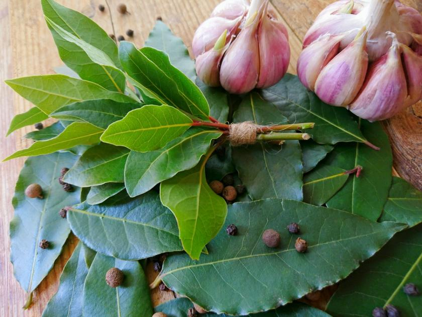 čerstvý bobkový list