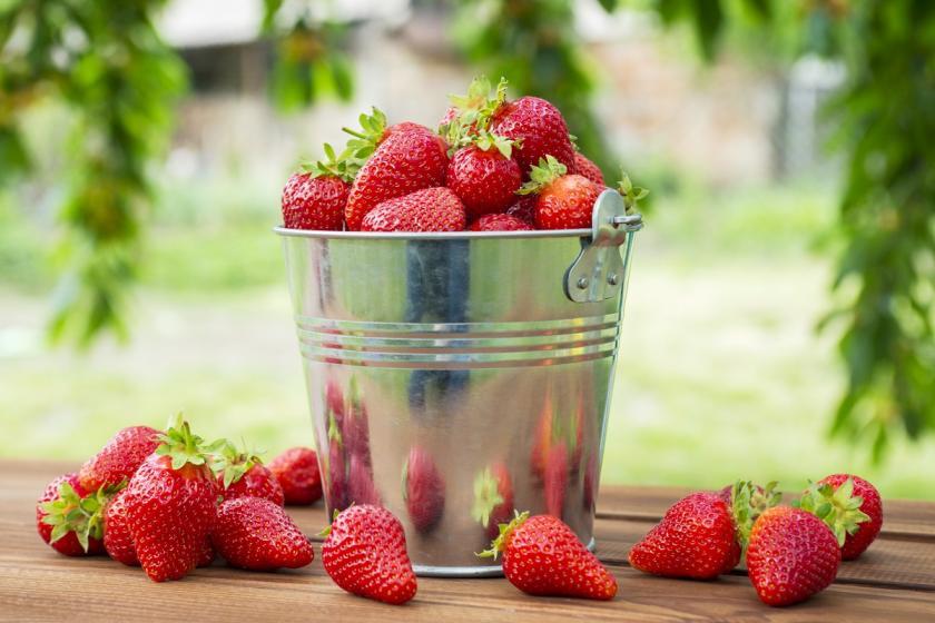 jahody v kyblíku