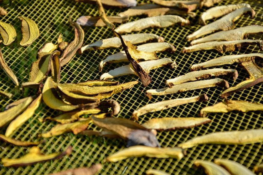 sušené houby na síti