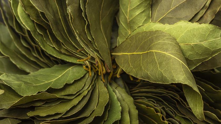 sušený bobkový list