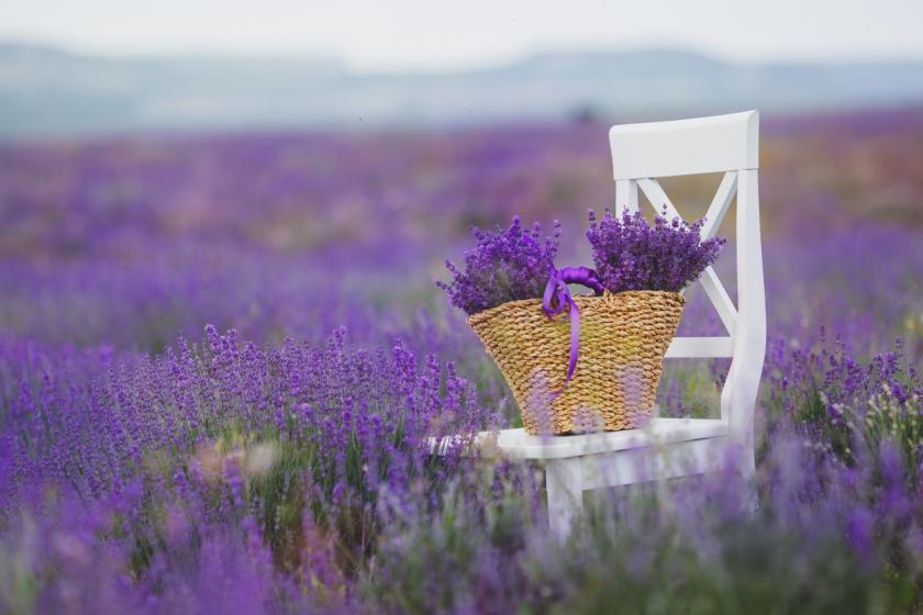 židle v levandulovém poli
