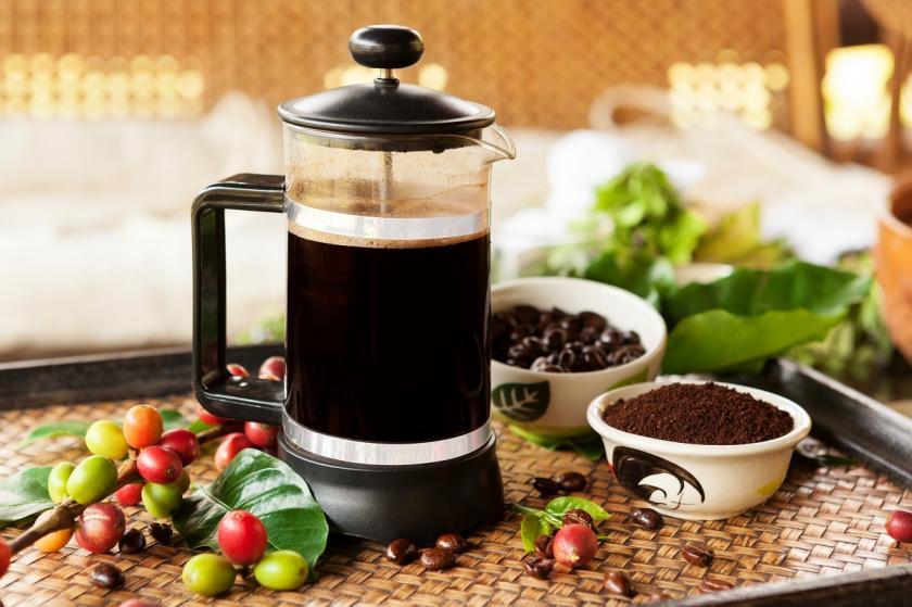 kávovník arabský