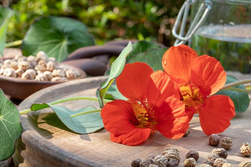 oranžové jedlé květy