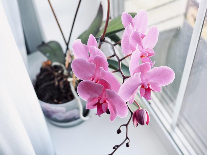 průhledný květináč na orchideje