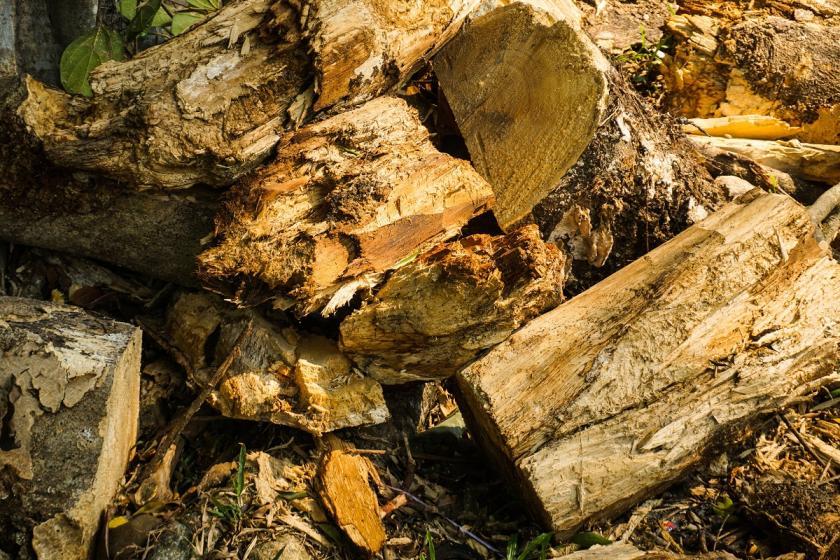 ztrouchnivělé dřevo