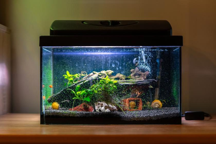 feng shui akvárium