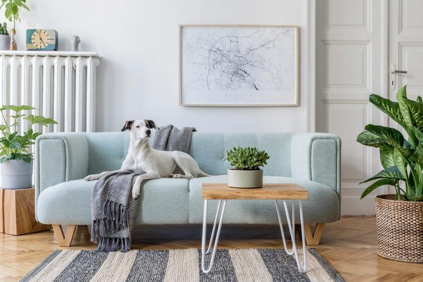 pes na modrém gauči